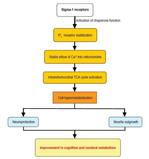 Beneficial effects of sigma-1 receptor agonism