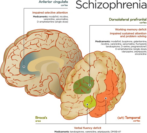 an overview of the causes and effects of schizophrenia An overview of expressed emotion carl v rabstejnek  our knowledge of the emotional effects of family life — good and  of either the causes of schizophrenia.